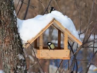 Экскурсоводы парка «Лосиный остров» расскажут о зимовке птиц в Москве и области