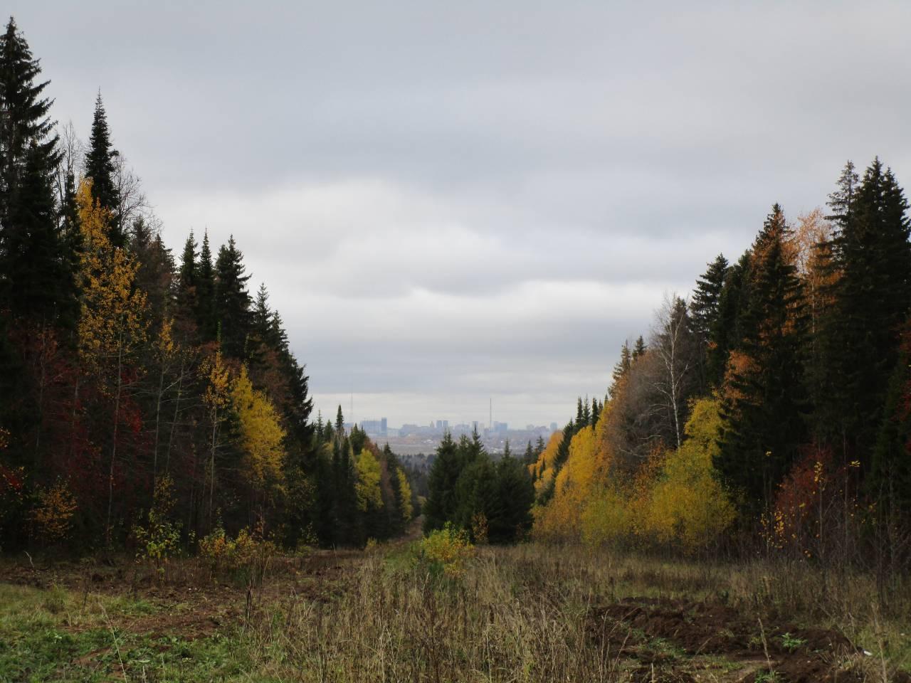 Поздравления с праздником день леса