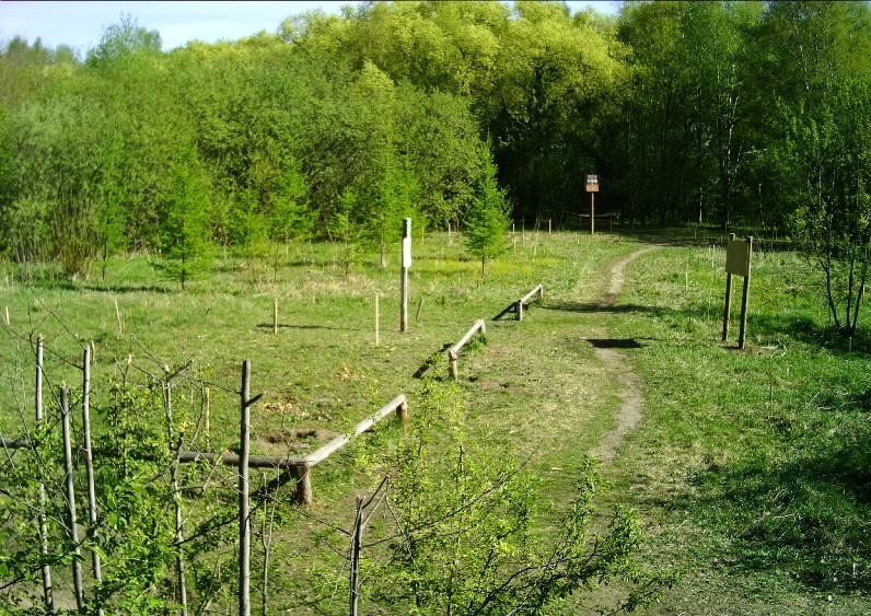 В Перми в Черняевском лесу высадили молодые деревья в честь Дня Победы